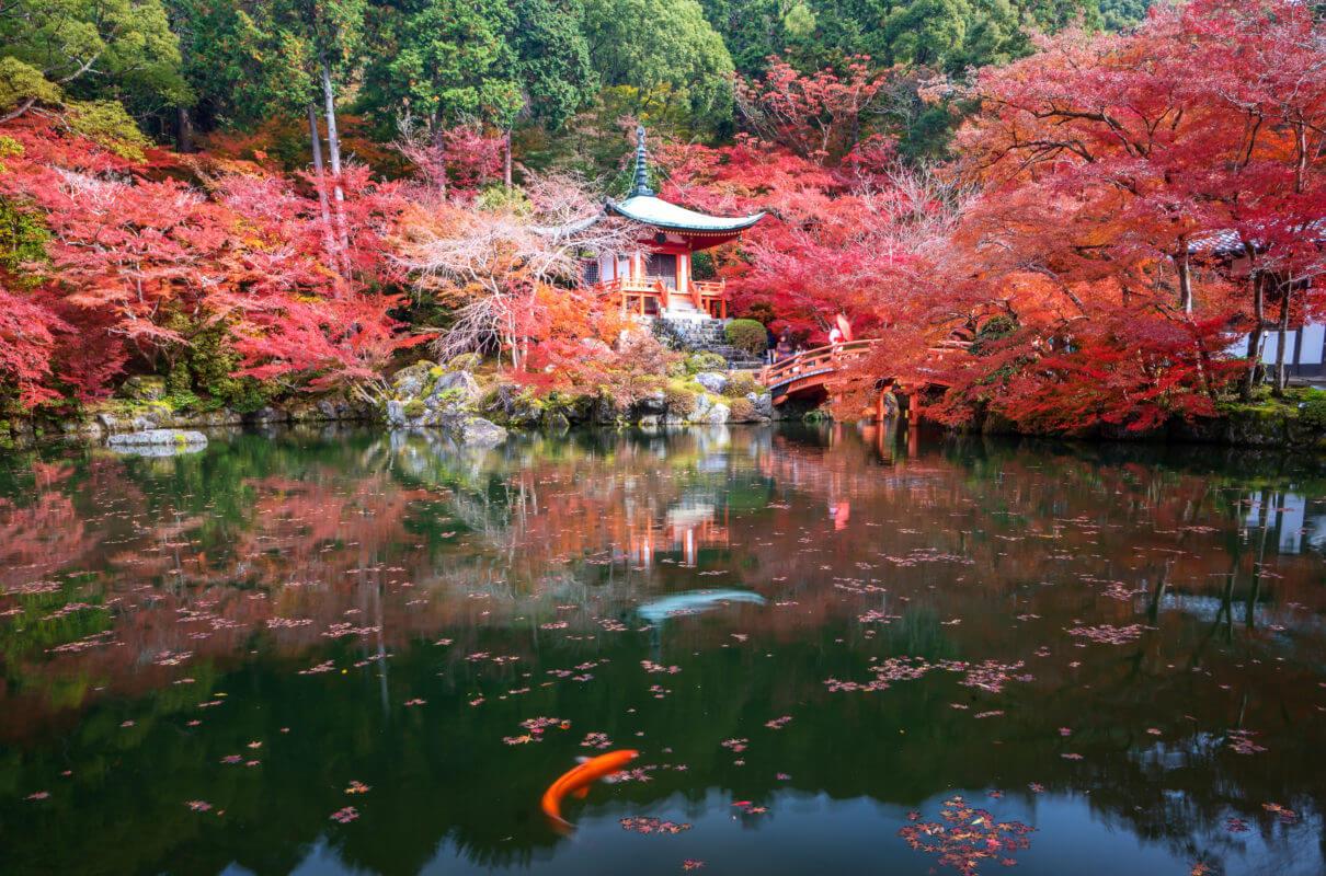 otoño aki learn academy aprender japonés