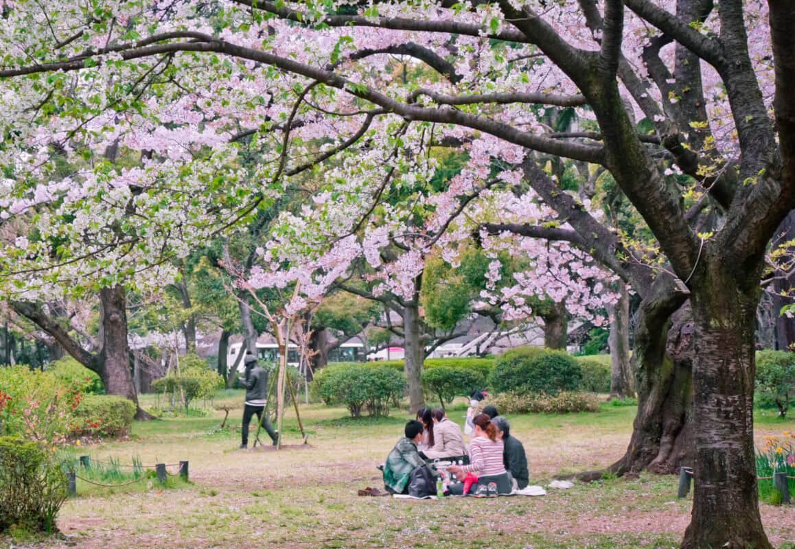 primavera hanami learn academy aprender japonés idiomas