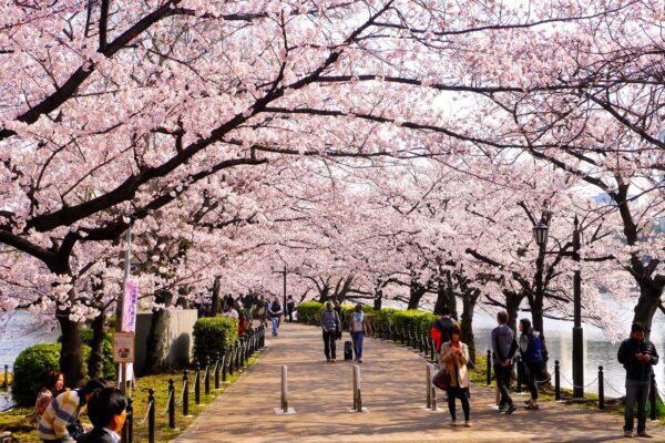 Día del Equinoccio de Primavera