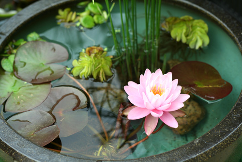 Cómo refrescarse en el verano en Japón